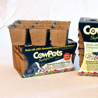 Cow Pots (18 pots in all)