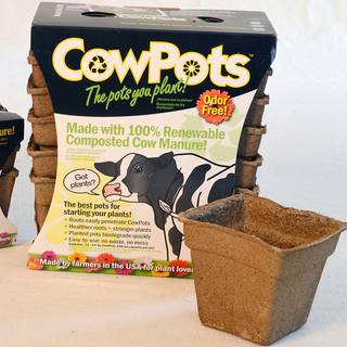CowPots (set of 12 four inch pots)
