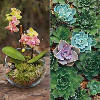 Forest Succulent Terrarium Kit (with seeds)