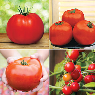 Parks Exclusive Tomato Seed Collection
