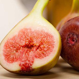 Celestial Sugar Fig