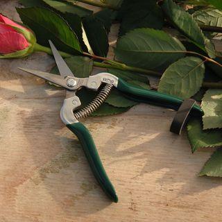 Flower & Fruit Snip