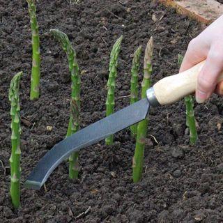 Ultimate Asparagus Knife