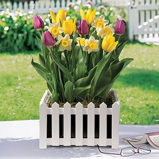 Flourishing Blooms Bulb Garden