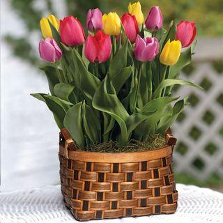 Spring Awakening Bulb Garden