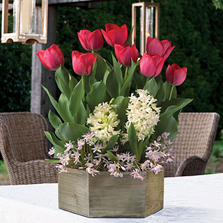 Spring Surprise Bulb Garden