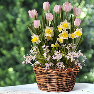 Cheerful Day Bulb Garden