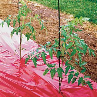 Red Tomato Mulch Fabric - High Yield