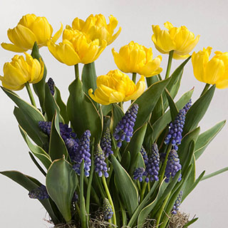 Vibrant Wish Bulb Garden Image