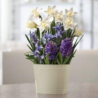 May Flowers Bulb Garden