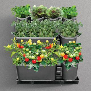 Urban Farming Starter Kit