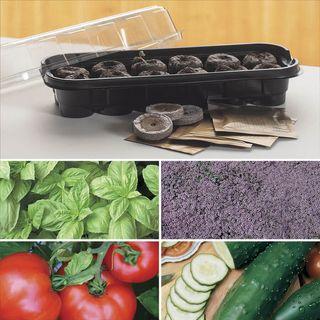Parks Windowsill Herb & Veggie Starter Kit