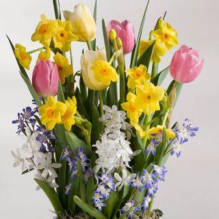 Spring Awakening Bulb Garden Image