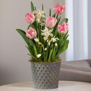 Spring Kiss Bulb Garden