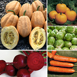 Ultimate Park Seed Cool Season Vegetable Collection