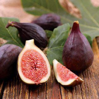 Ficus Violette de Bordeaux Fig