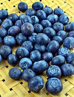 Earliblue Blueberry