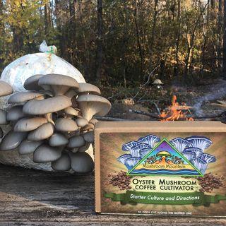 Cardboard and Coffee Bulk Starter - 5 lbs