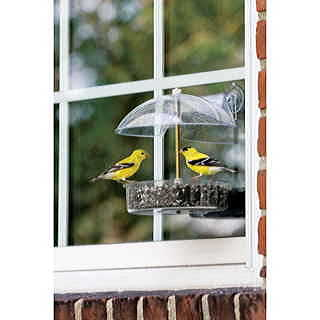 Birdwatchers Delight Window Feeder