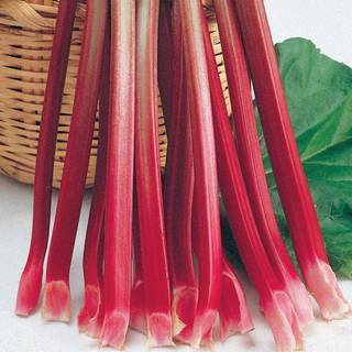 Victoria Rhubarb Plant - Pack of 3