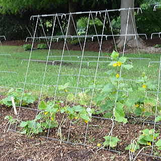 Park's Wire Cucumber Support Image