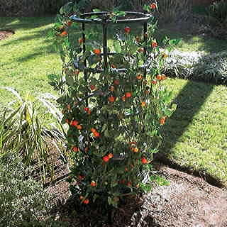 Expandable Tomato Support
