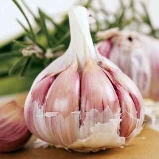 Garlic Inchelium Red