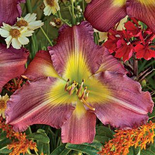 Garden Show Daylily