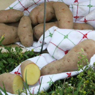 Rose Finn Apple Potato - 2 LB Bag