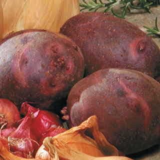 Viking Purple Potato