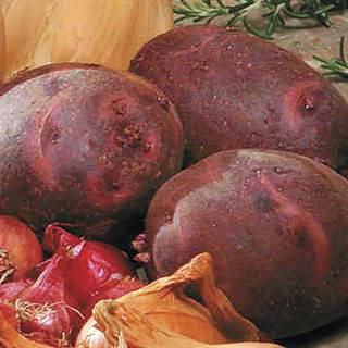 Viking Purple Potato - 2 LB Bag