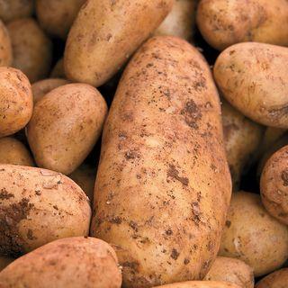 Yukon Gold Potato - 2 LB Bag