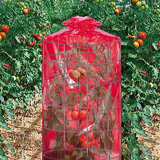 Better Reds® Greenhouse