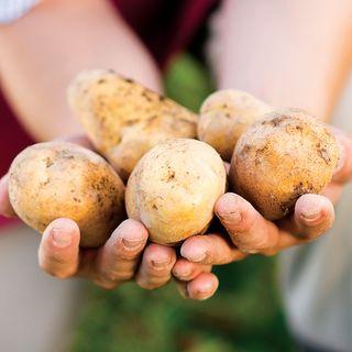 Kennebec Potato - 2 LB Bag