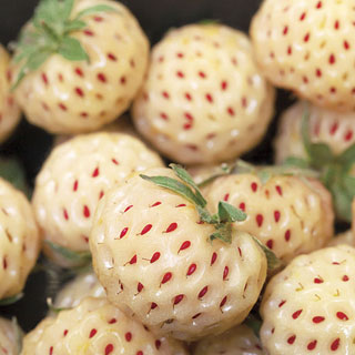Pineberry Strawberry