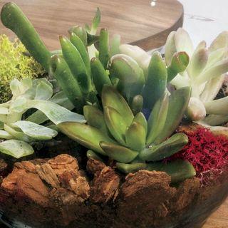 Succulent Terrarium Bowl Image