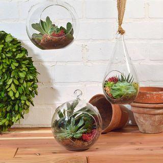 Hanging Teardrop Succulent Garden Image