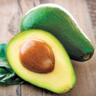 Persea Avocado Wurtz