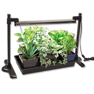 Sunblaster 24 inch Light and Stand Kit
