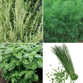ProEasy Herb Seed Collection