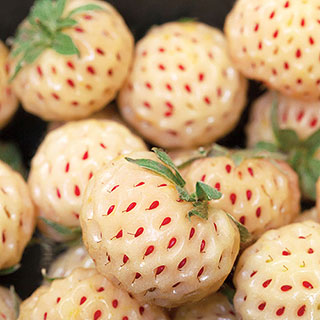 Pineberry Strawberry - Pack of 25