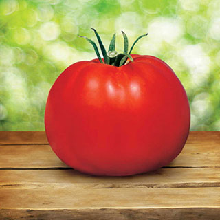 Parks Whopper CR Improved Hybrid Tomato (pack of 3)