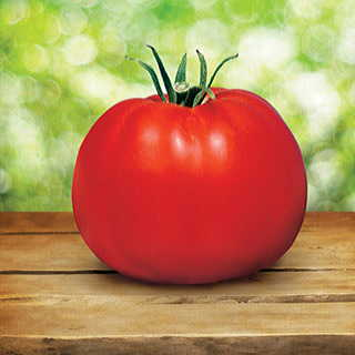 Parks Whopper CR Improved Hybrid Tomato Plant