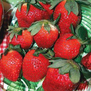 Strawberry Allstar Plant