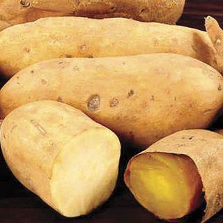 White Yam Sweet Potato Plant