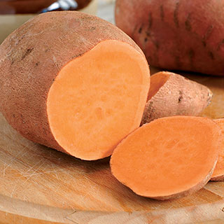 Centennial Sweet Potato Plant