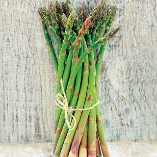Jersey Supreme Hybrid Asparagus Plants