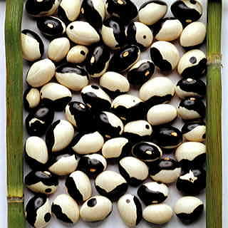 Yin Yang Shell Bean Seeds