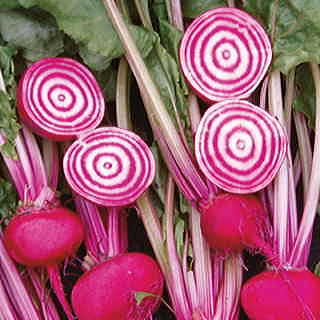 Chioggia Guardsmark Beet Seeds
