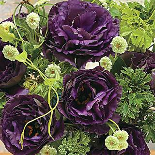 One Black Pearl Lisianthus Seeds